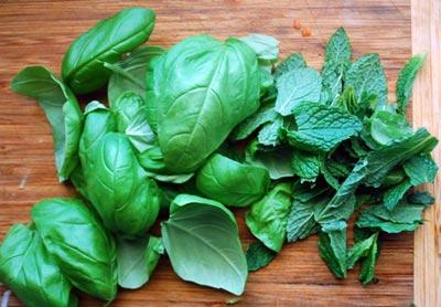 Fresh basil and mint
